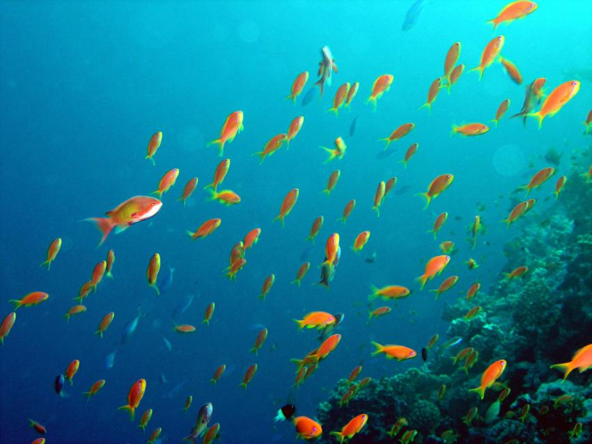 El Quseir - Mangrove Bay, Mangrove Bay  Hausriff,Mangrove Bay,El Quseir,Ägypten
