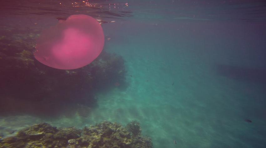 Quale, Coraya Divers, Coraya Beach, Marsa Alam, Ägypten, Marsa Alam und südlich