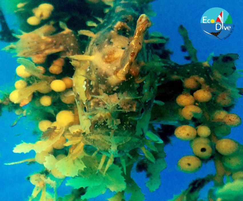Eco Dive, Coyaba Beach Resort, Grenada