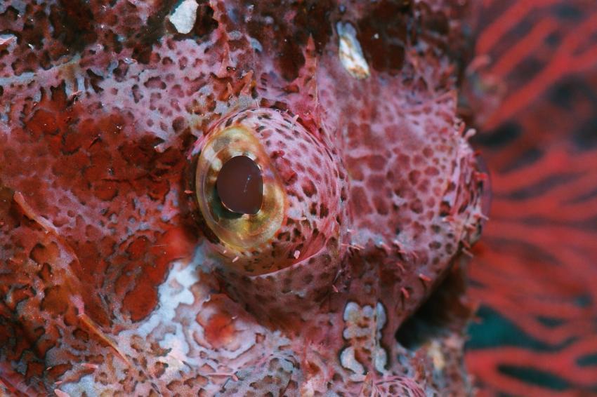 Fotoausstellung Grandeblu Indonesien, Indonesien allgemein,Indonesien,Auge,Drachenkopf