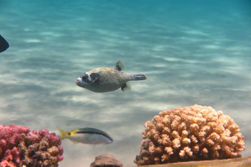 Scuba World Divers_Makadi Bay_Hausriff_2, Tauchen in der Makadi Bay, Scuba World Divers Makadi Bay, Ägypten, Hurghada