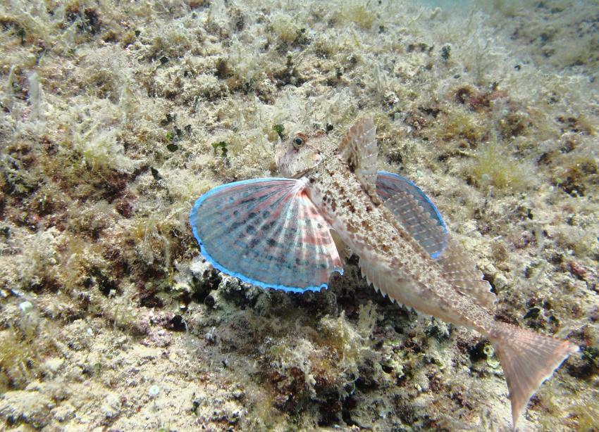 Baska Kricin Juni 2018, Squatina Diving, Insel Krk - Kroatien - Baska, Kroatien