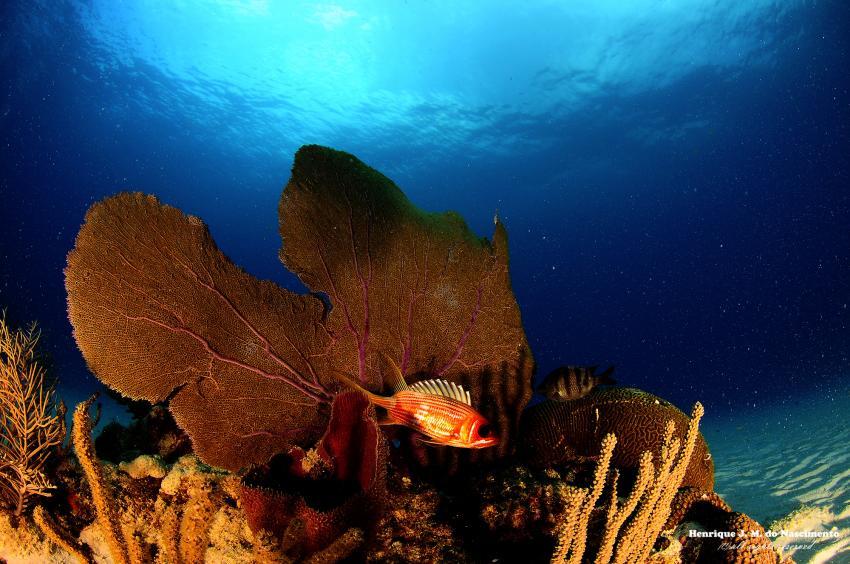 Unterwasser mit ScubaCaribe, ScubaCaribe Playa del Carmen - RIU Hotels, Mexiko