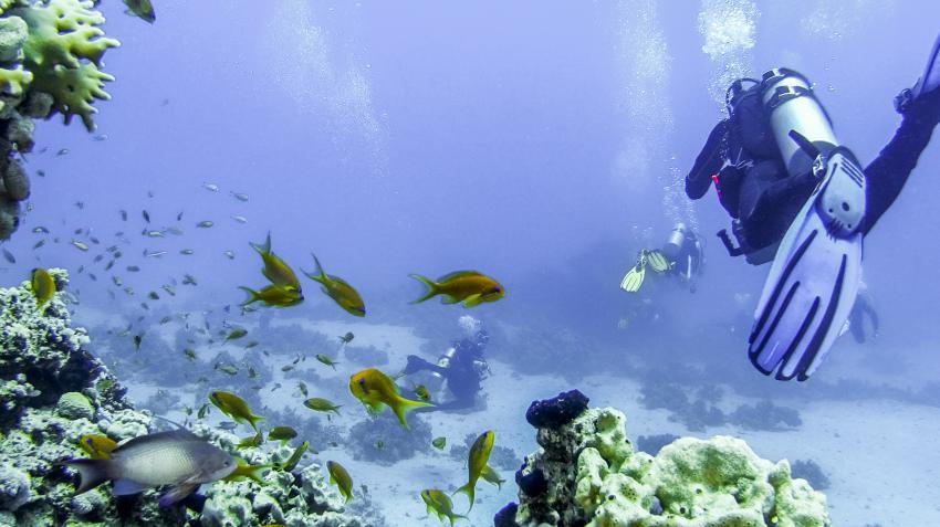 Scuba_World_Divers_Makadi_Bay, Tauchen in Makadi Bay, Scuba World Divers Makadi Bay, Ägypten, Hurghada