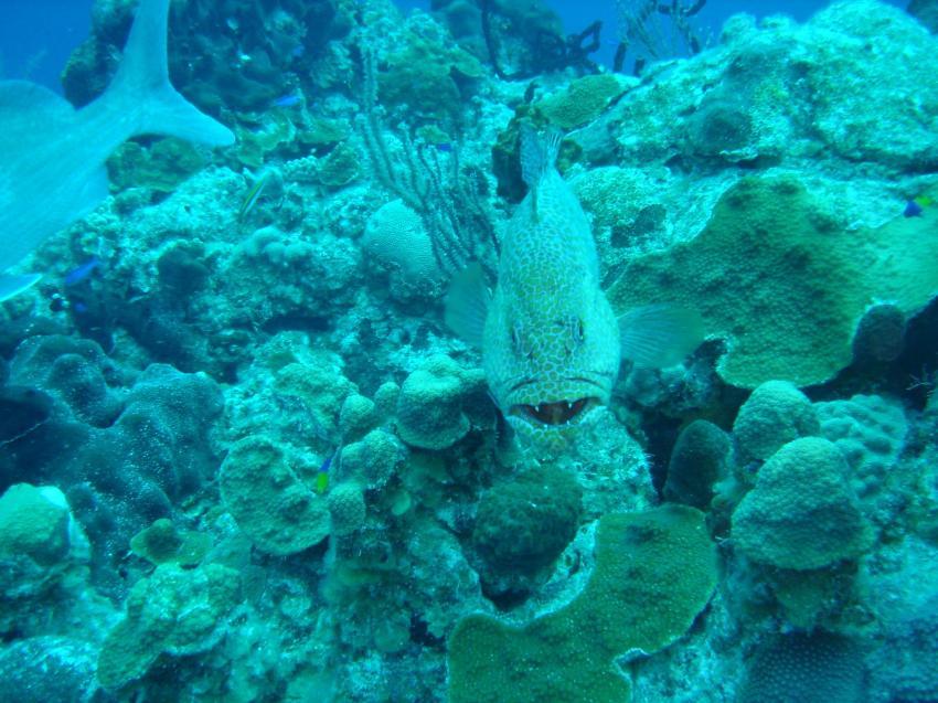 Long Island, Long Island,Bahamas