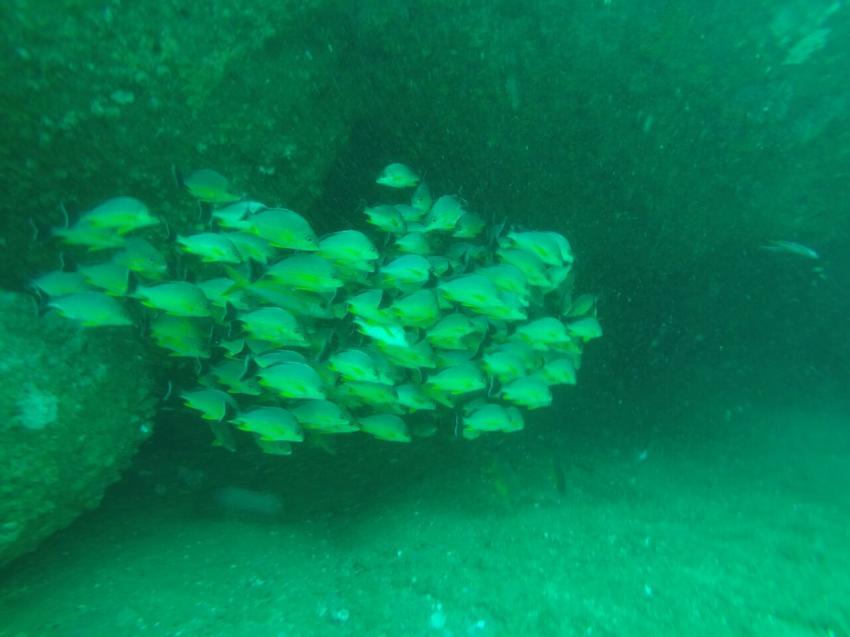 Diver´s Land Dive Club Unawatuna, Sri Lanka