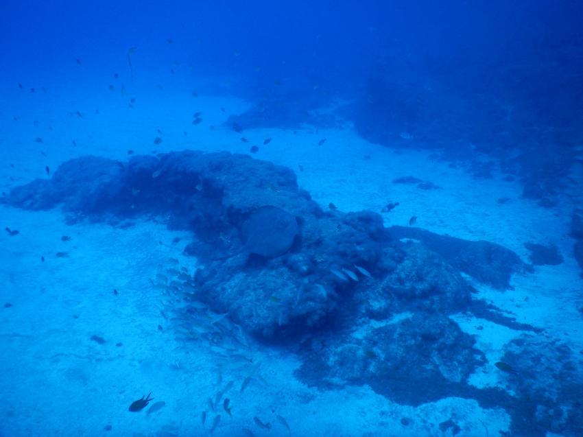 Stachelrochen 2, Arinaga, Gran Canaria, Spanien, Kanarische Inseln