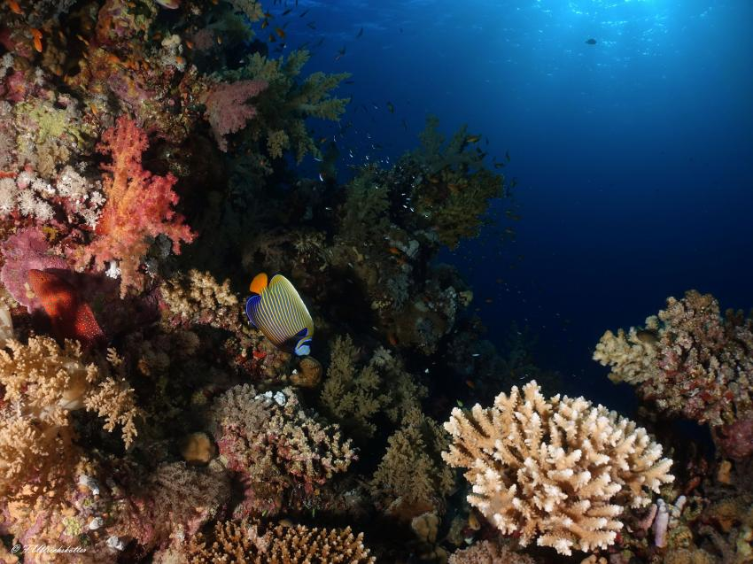 Marsa Alam und südlich, Ägypten, Korallen
