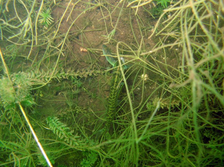 Zansen - Feldberger Seen, Zansen,Feldberger Seenlandschaft,Mecklenburg-Vorpommern,Deutschland