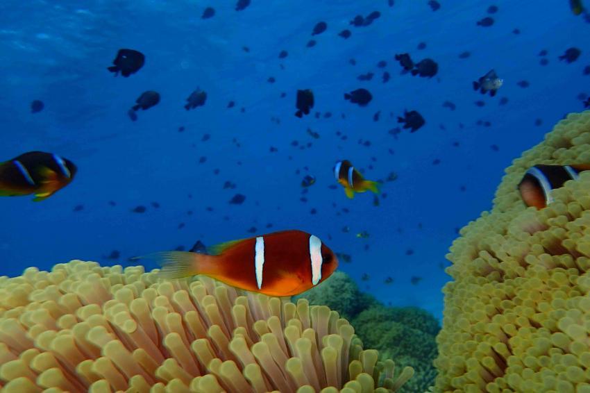 Lagune Nemo, Marsa Nakari Ecolodge, Marsa Alam, Ägypten, Marsa Alam und südlich