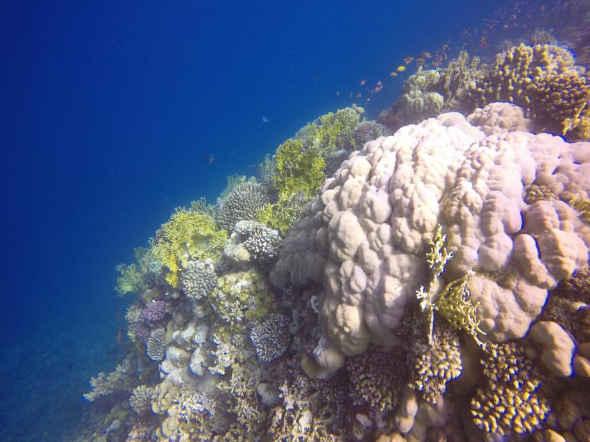 Scuba World Divers SuneoClub Reef Marsa_9, Tauchen Ägypten Marsa Alam, Scuba World Divers, SuneoClub Reef Marsa, Port Ghalib, Ägypten, El Quseir bis Port Ghalib
