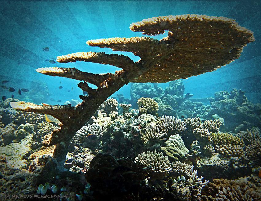 Nord Ari Atoll, Mathiveri, Nord Ari Atoll,Mathiveri,Malediven