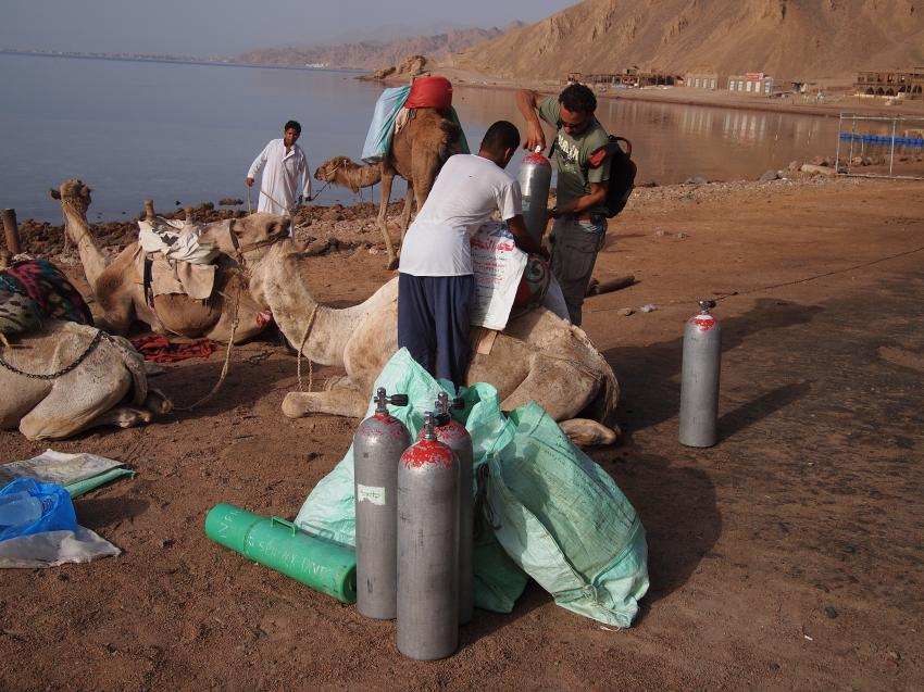 Wüstenschiff-Tauchen, Ras Abu Galum - Dahab,Ägypten