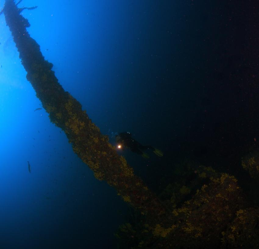 Francesca di Rimini / Kaprije / Najada Diving, Francesca da Rimini,Kroatien,Wrack,Aufbauten,bewachsen,Korallen,Lampe