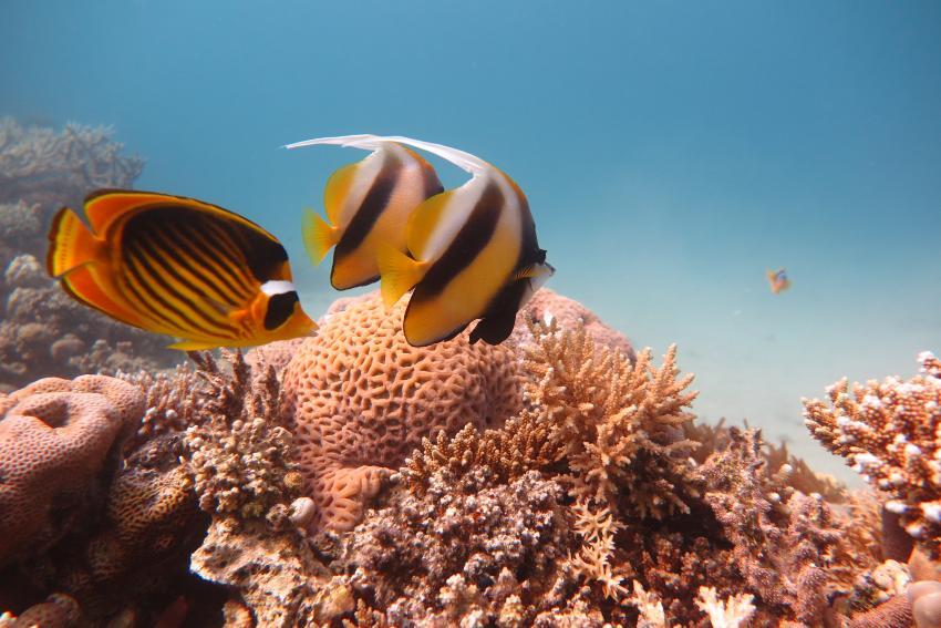 Scuba World Divers Makadi Bay_Hausriff_2, Tauchen in der Makadi Bay, Scuba World Divers Makadi Bay, Ägypten, Hurghada