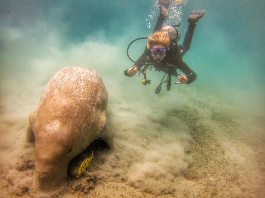 ADROUB diving, Ägypten, Marsa Alam und südlich