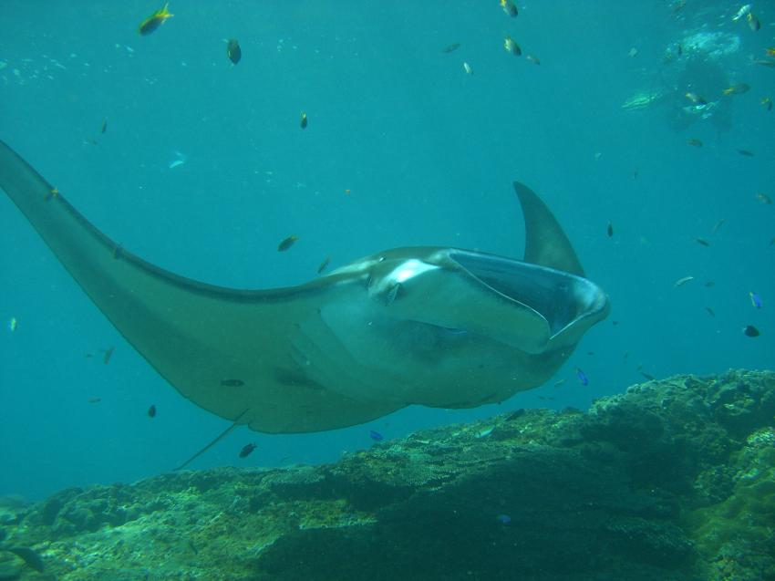 Manta Point, Manta Point,Indonesien
