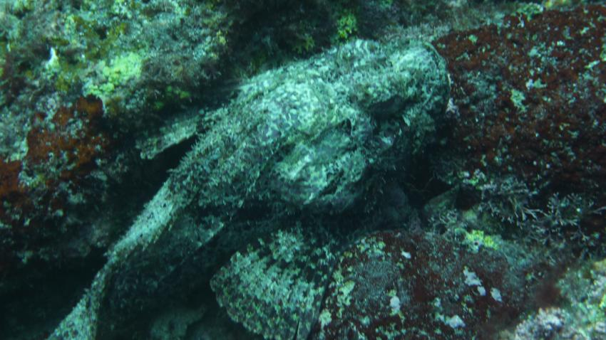 Dive Tribe, Sao Vicente,Sao Pedro,Kap Verde