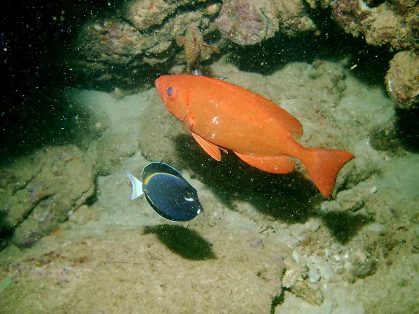 Murion Island / Exmouth, Murion Island / Exmouth,Australien