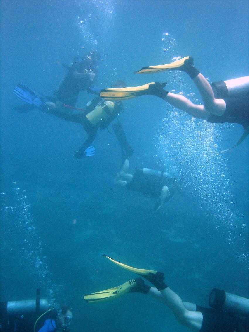 Heron Island / GBR, Heron Island,Australien,Rudeltauchen,Tauchgruppe