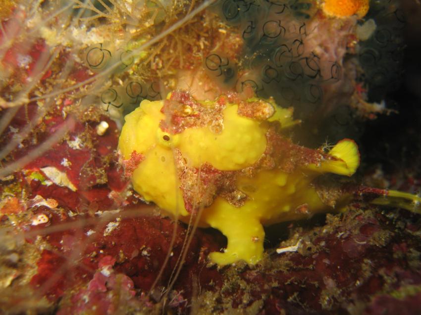 Dive Froggies, Manado, Insel Bunaken
