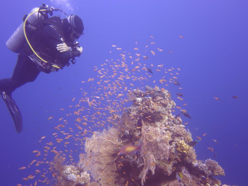 Umm Gamar im November 2013, Umm Gamar (Hurghada),Ägypten