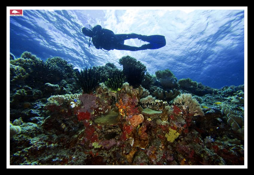 Selayar Island im Dezember, Selayar/Südsulawesi,Indonesien,Taucher,Korallen