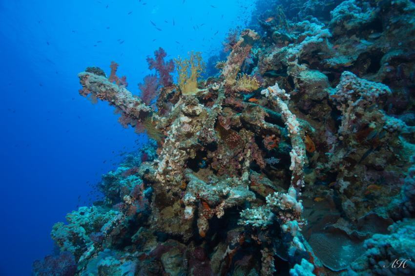 """Überreste der MS """"Lara"""" auf ca. 60m, Wrack, MS Lara, Jackson Reef, Wrack(reste) MS """"Lara"""" , Ägypten"""