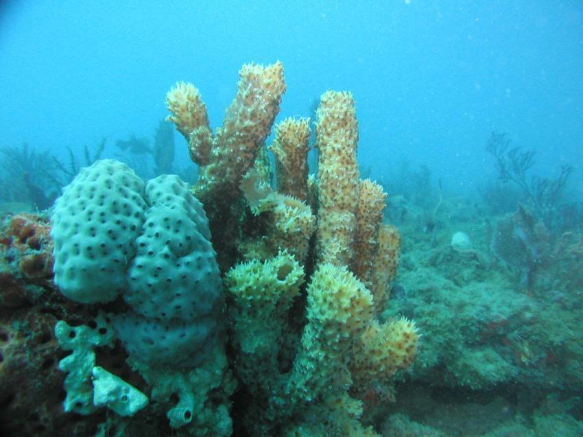 Riviera Beach - Reef ´Bath&Tennis´, Riviera Beach,FL,Florida,USA