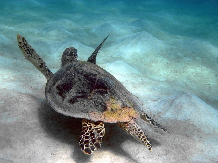 Scuba World Divers Soma Bay, Tauchen Ägypten Soma Bay, Scuba World Divers Soma Bay, Caribbean World Resort, Ägypten, Safaga