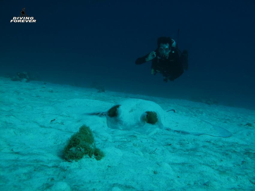 Tauchen in Hurghada, Hurghada Tauchen, Diving Forever Hurghada, Ägypten, Hurghada
