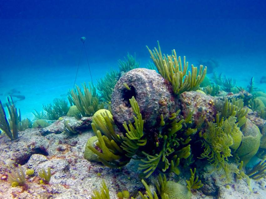 L'Herminie Bermudas, Wrack der Herminie, Bermuda