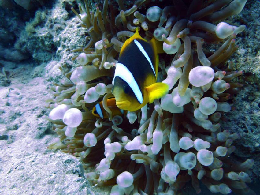 i-Dive Dahab, Ägypten, Sinai-Nord ab Dahab