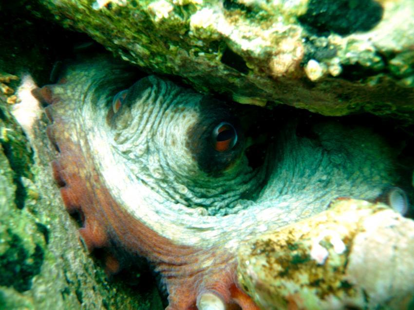 Özdere, Özdere,Türkei,Krake,Oktopus,Auge