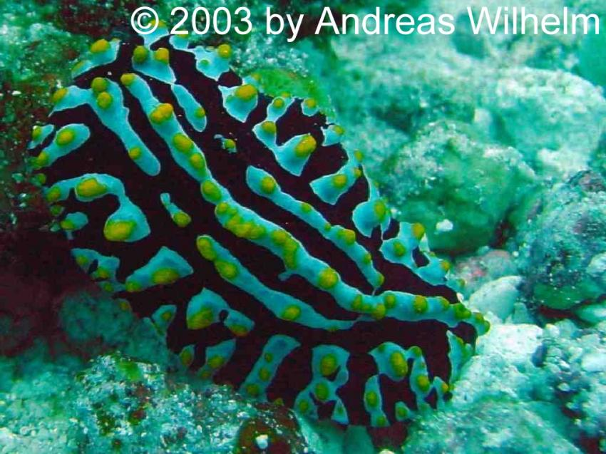 Potatoe Reef (Nord Male Atoll), Potato Reef,Nord Male Atoll,Malediven
