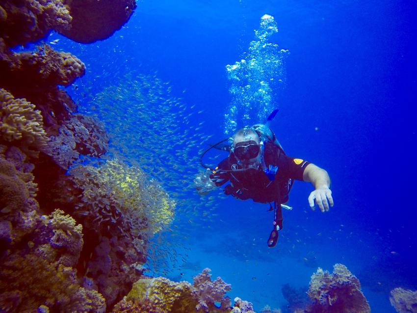 SuneoClub Reef Marsa_Port Ghalib_Hausriff_1, Ägypten Tauchen Marsa Alam Port Ghalib, Scuba World Divers, SuneoClub Reef Marsa, Port Ghalib, Ägypten, El Quseir bis Port Ghalib