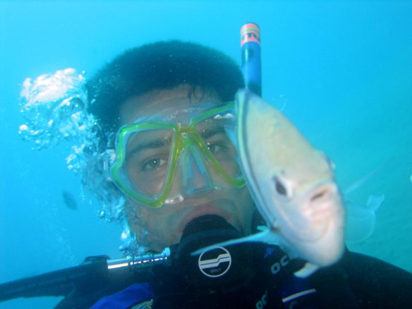 Puerto Plata Dressel Divers, Puerto Plata,Dominikanische Republik,taucher,fisch,gemeinsam,begegnung,zutraulich
