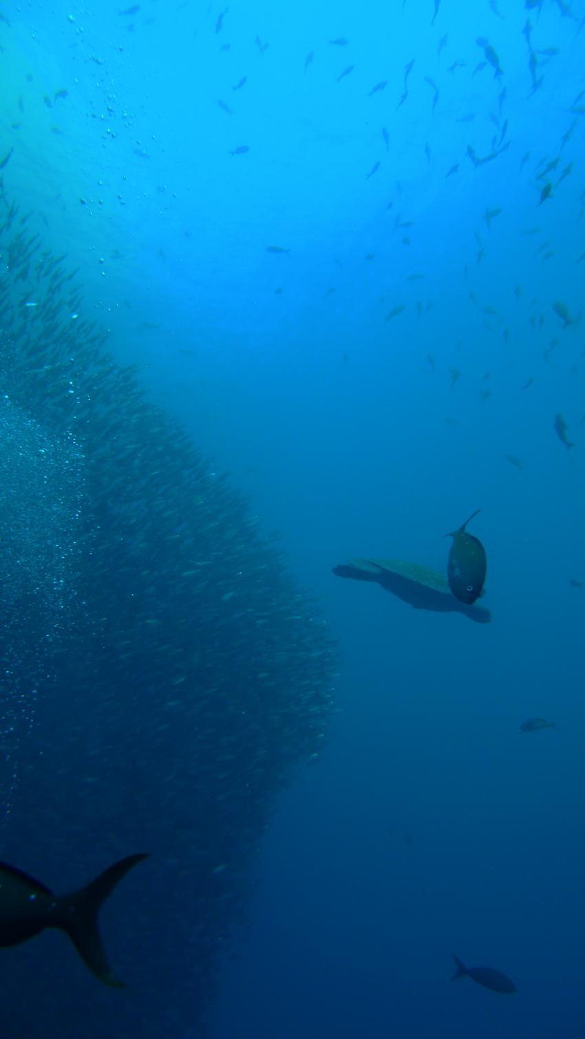 Halmahera, Halmahera,Galapagos Allgemein,Galapagos,Ecuador,Indonesien