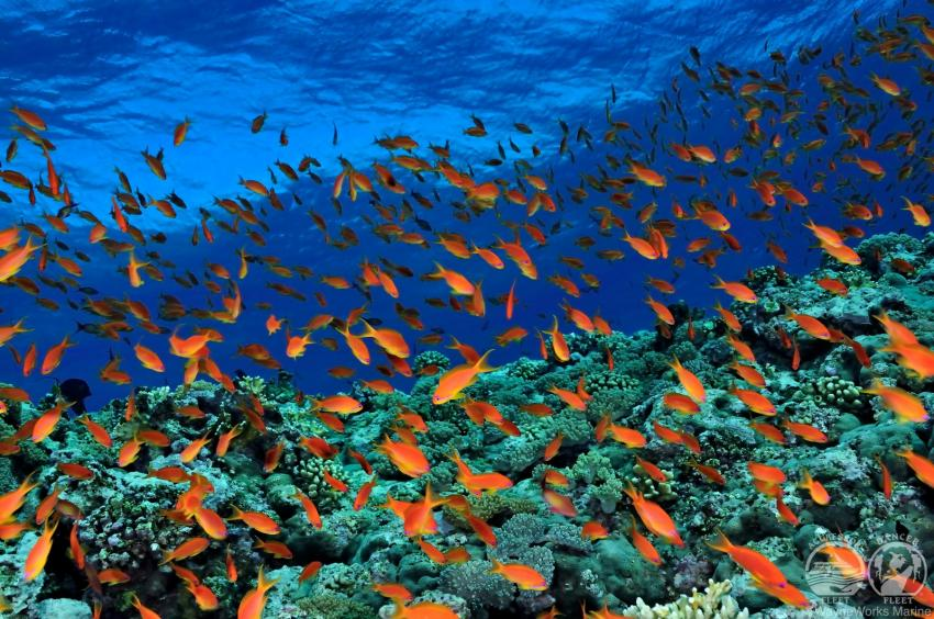 red sea, test, Albanien