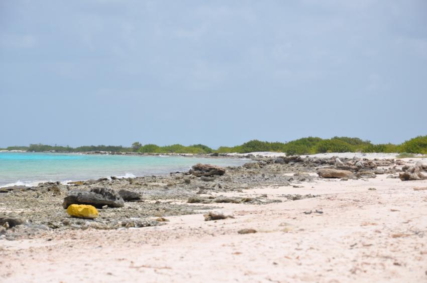 Tauchfotos Bonaire, verschiedene Tauchplätze Bonaire,Bonaire,Niederländische Antillen