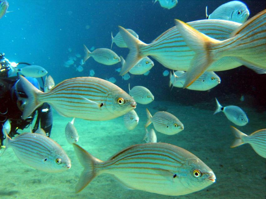Aquatis Divingcenter Lanzarote