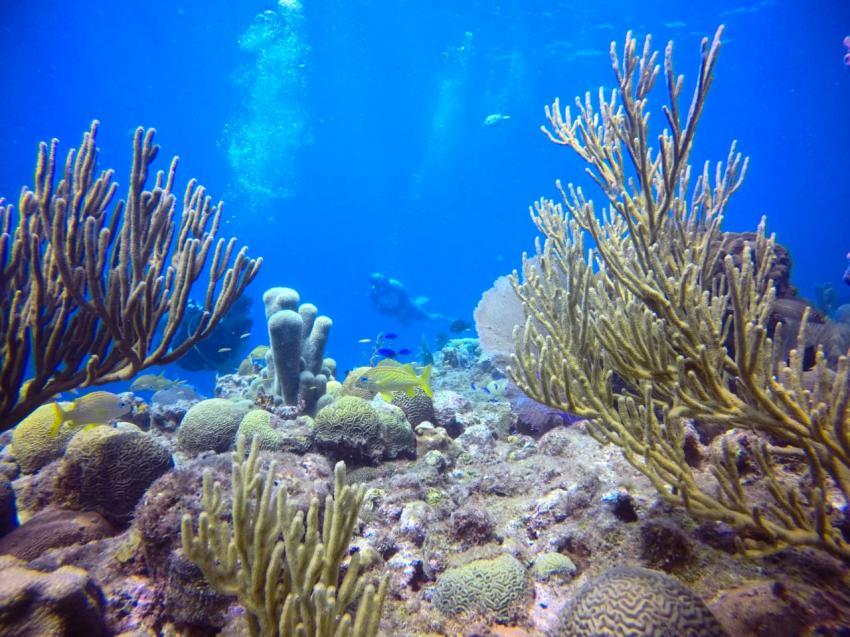 Karibische Korallen im Sandgrund