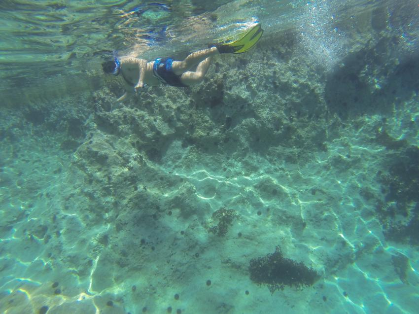 Snorkeling Skopelos Sporades, Tauchen schwimmen griechenland, Skopelos Dive Center, Panormos Skopelos, Griechenland