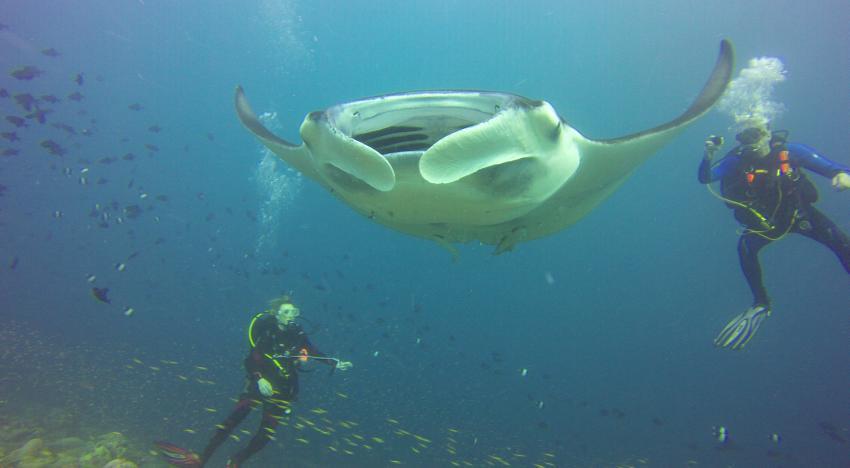 Manta, M/V Eco Blue, Malediven