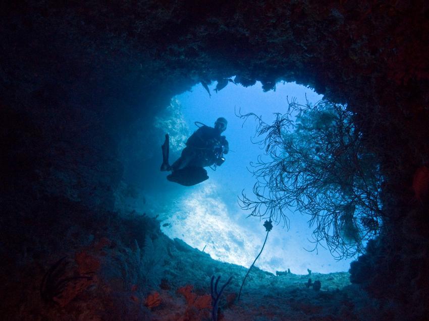 aus dem Süden des Ari Atolls, Süd Ari-Atoll,Malediven,Höhle,Taucher,Eingang,Lichtspiel,warten,bewachsen