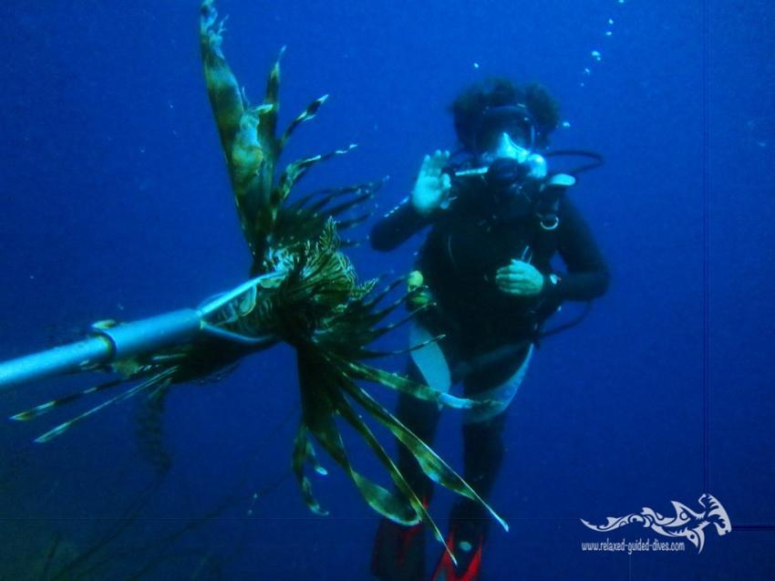 Lionfish, Relaxed Guided Dives, Niederländische Antillen, Curaçao