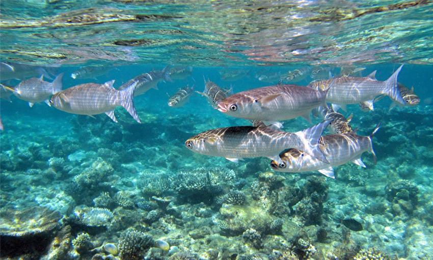 Hausriff Sehenswürdigkeiten, Thudufushi,Malediven