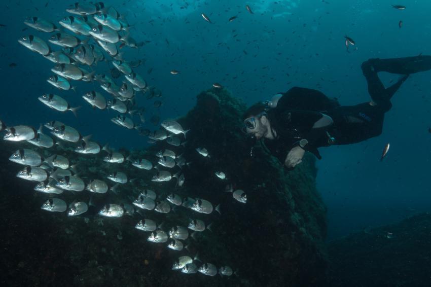 Taucher und Fischschwarm, Portofino Divers, Santa Margherita Ligure (Ligurien), Italien