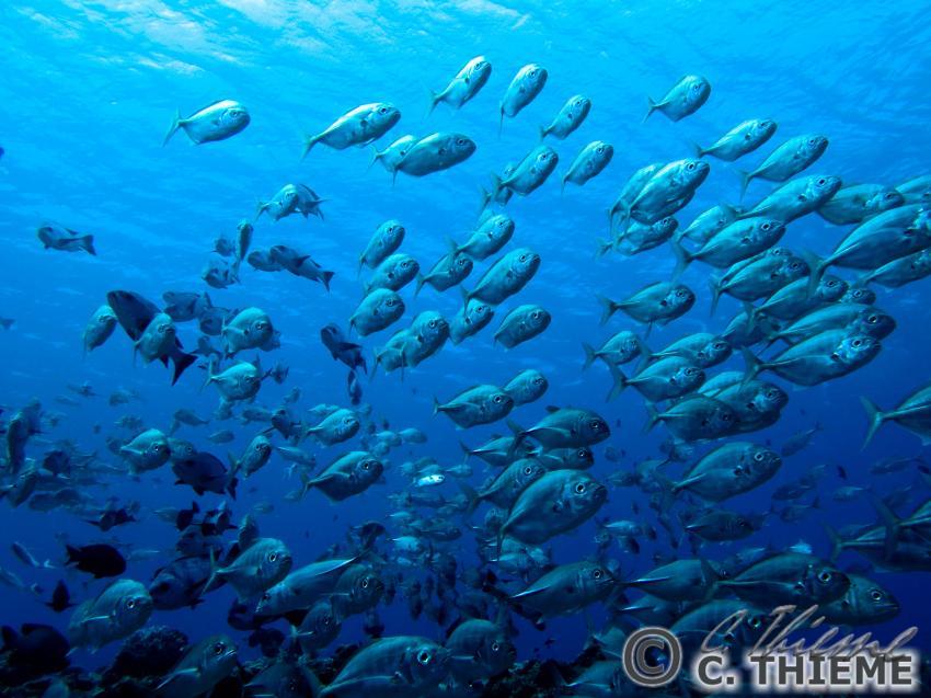 Unterwasser Palau, Palau: Koror & Peleliu,Palau