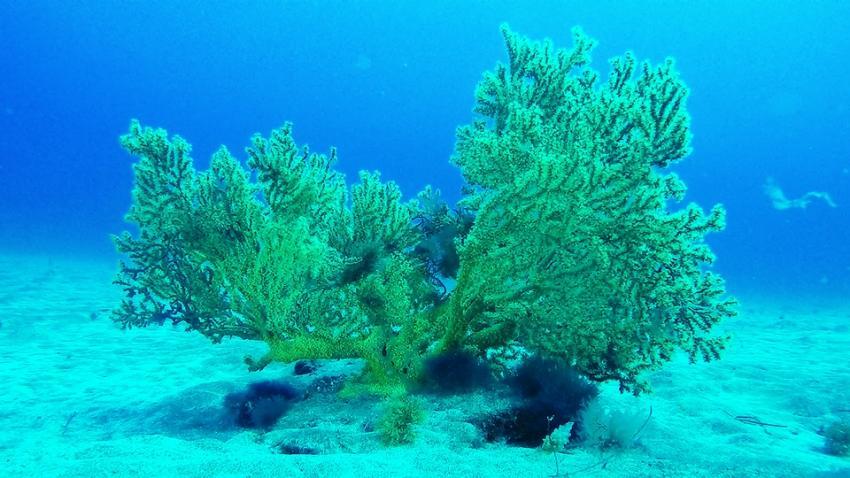 Buceo Sur Gran Canaria, Spanien, Kanarische Inseln